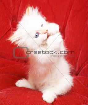 Little cat eating