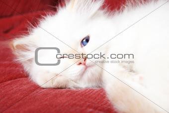 Sly kitten
