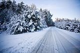 forest road scene in winter