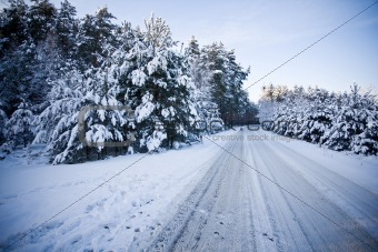 forest road scene in winter