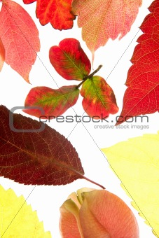 Autumn, fall leaves decorative still at studio