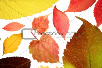 Autumn, fall leaves decorative still at studio white background