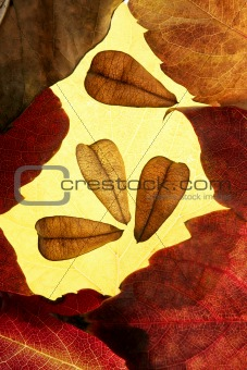 Autumn leaves in frame composition, golden transparent