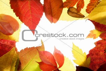 Autumn  leaves frame, studio over white