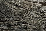 Aged gray wood macro texture for background