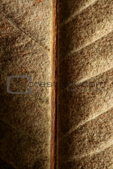 Close up of a leaf, gloden brown in autumn