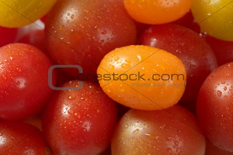 Little cherry varied multi color tomatoes