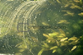 Abstract background of river surface plants