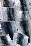 Sardine fish fillet skin texture on market