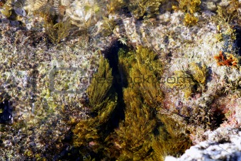 Algae, seaweed from Mediterranean sea shore