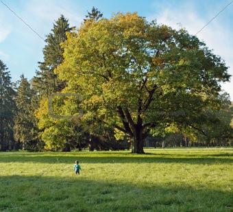 Boy and magic oak