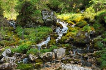 Smal creek in the German Alps