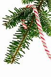 Candy cane on tree