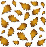 Oak autumn leaves