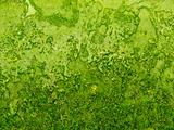 Background green rough texture