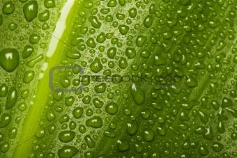 Waterdrops on leaf texture