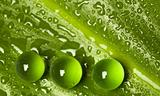 Wet green leaf pattern with marbles