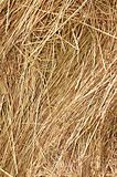 Yellow gold straws