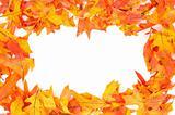 Fall - Autumn leaf border
