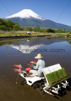 The Rice Planter
