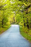 Single lane road through heavily wooded forest.