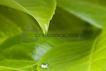 waterdrop from leaf