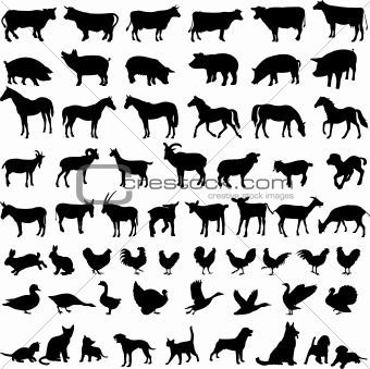 farm animals - vector
