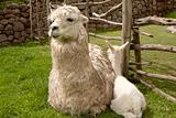 Alpaca baby and mother