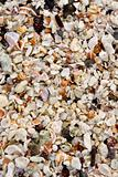 A Close-up view of seashells on a Galapagos Island beach