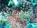 Underwater shot of coral Maldives Islands