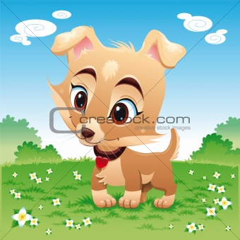 Baby dog in the meadow