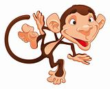 Funny monkey