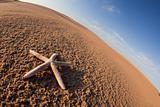Dunes, sand, shells