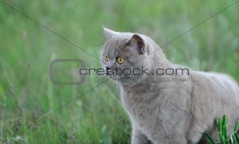 Cat in a grass.