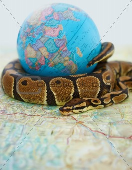 Ball python coiled around a globe