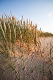 Summer, dunes, holidays