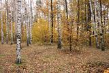 autumunal forest