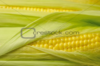 fresh corn background