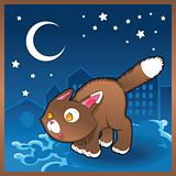 Baby cat in the night