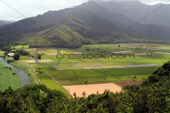 Aerial of Fields