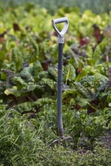 A spade in the garden