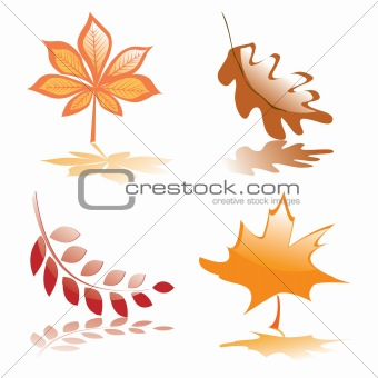 Four glossy autumnal leaves