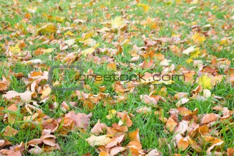 autumn grass background