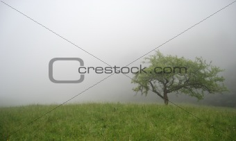 foggy morning in mountains