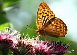beautiful nature scene, butterfly on flower