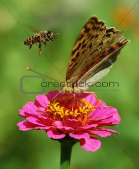 beautiful nature scene, butterfly on flower