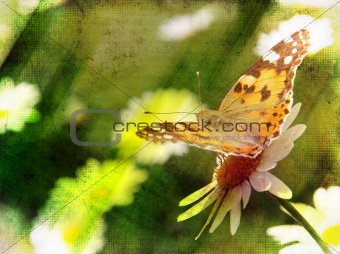 abstract grunge nature scene butterfly on daisy flower