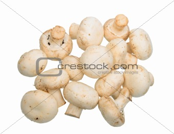 Group of white field mushroom.