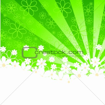 green background with daisies and sunshine. vector