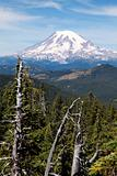 Mount Rainier with Trees